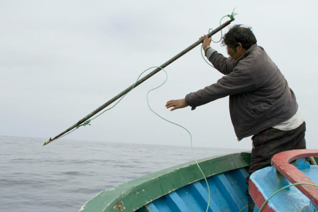 enact legislation banning harpoons on fishing boats
